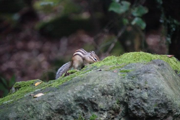 6 DSC03942 다람쥐 치유의숲